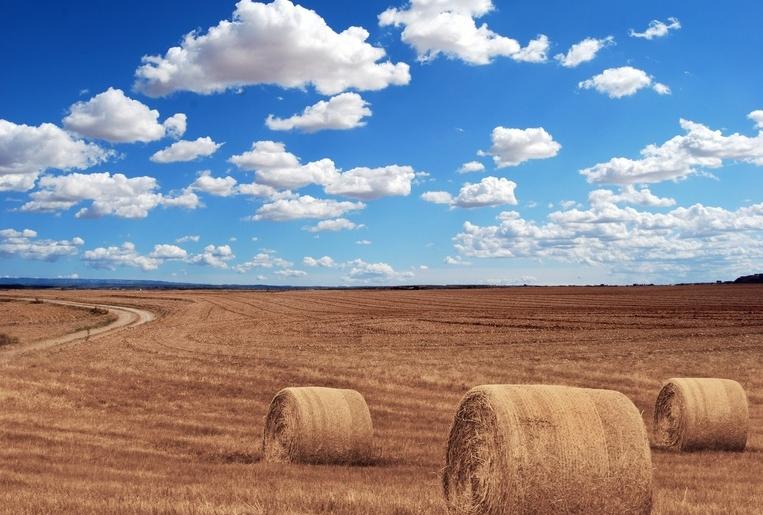 Paysage et champs en août