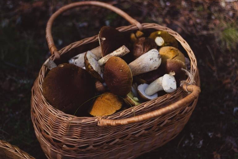 Les saveurs de septembre : les champigons des bois