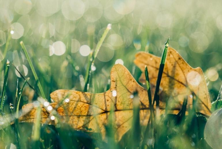 Premières couelurs d'automne