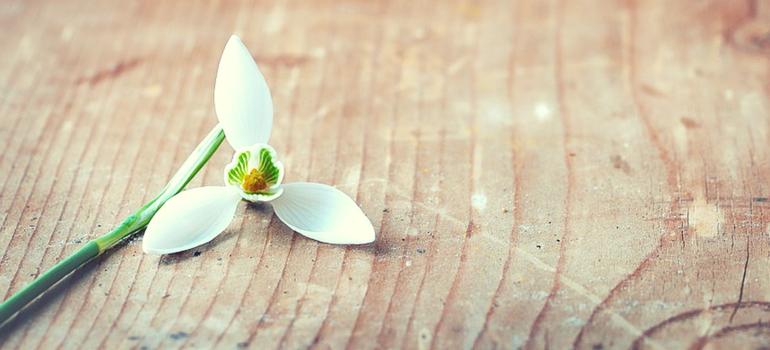 10 bonnes raisons d'aimer février